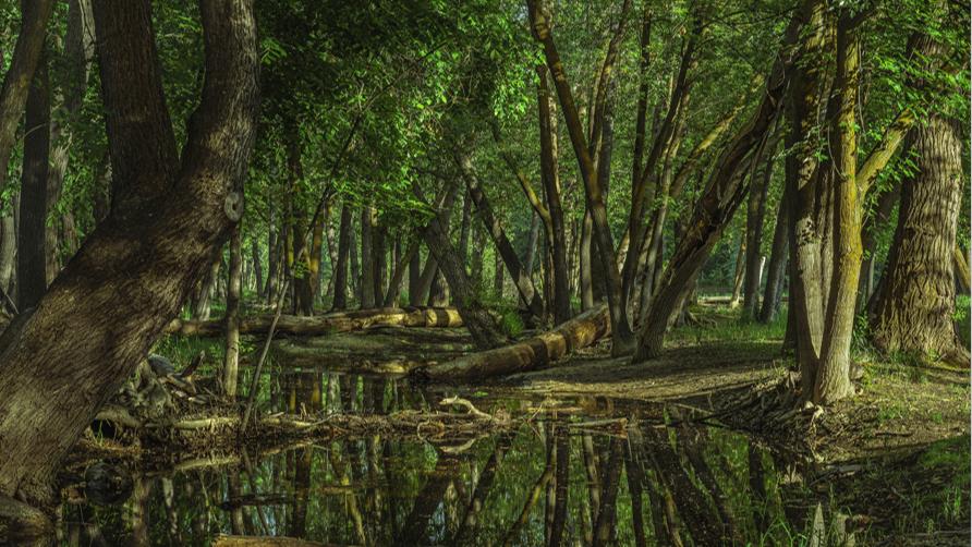 15 empresas nacionais revelam os seus compromissos pela biodiversidade