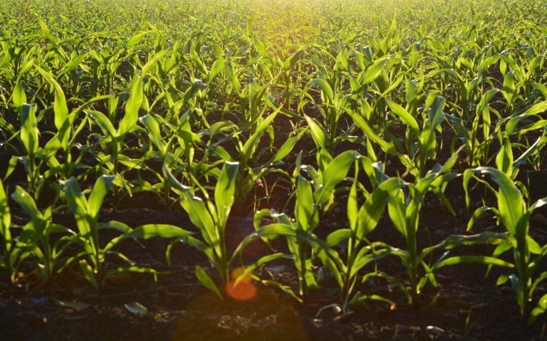 O futuro da agricultura e da alimentação